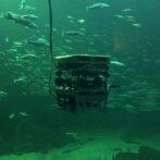 Spændende internationalt forskningsprojekt om bæredygtig fiskeri på Nordsøen Oceanarium
