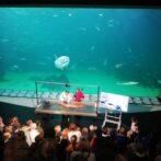 Dissektion af marsvin foretages på Nordsøen Oceanarium