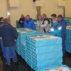 Guidet fiskeauktion og havnegåtur