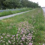 HJØRRING KOMMUNE: Flere blomster i rabatten